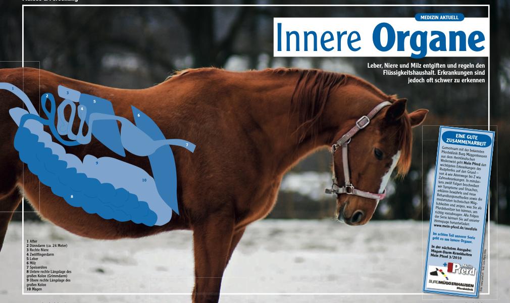 Medizin-Serie Teil 8: Innere Organe - Mein Pferd – Mein Freund