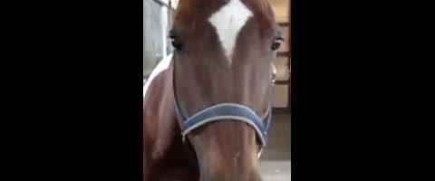 Atemprobleme beim Pferd behandeln mit LifeWave