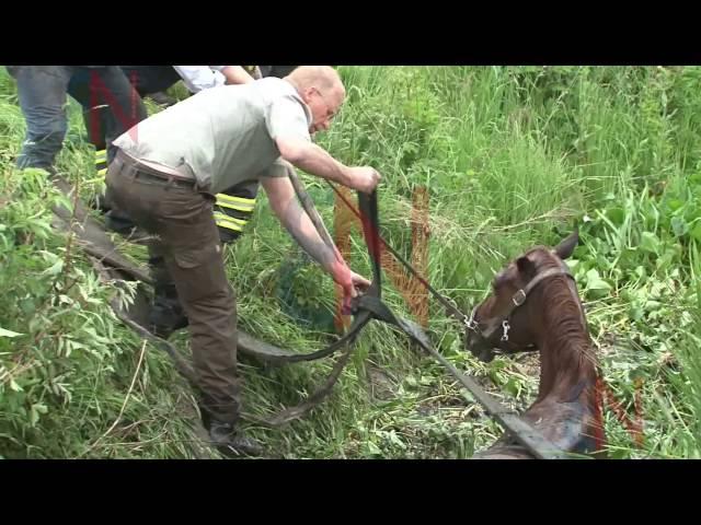 Feuerwehr rettet Pferd aus Graben – Graben vor kurzem umgebaut