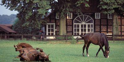 imago50040065h_opt Bildnummer: 50040065  Datum: 03.07.1994  Copyright: imago/Karo Bildnummer: 50040065  Datum: 03.07.1994  Copyright: imago/Karo Zuchtpferde - Pferdekoppel bei Warendorf, Pferde räkeln sich auf der Wiese, Gebäude, außen, Außenansicht , Landschaft , Tiere , Komik; Pferd, Pferde, Zuchtpferd, Gestüt, Pferdegestüt, Weide,  Pferdezucht, Zucht, liegt, liegen, Boden, Rücken, Rückenlage; , quer, Kbdia, Totale, Deutschland, Ohne, Nordrhein-Westfalen, Europa; Aufnahmedatum geschätzt