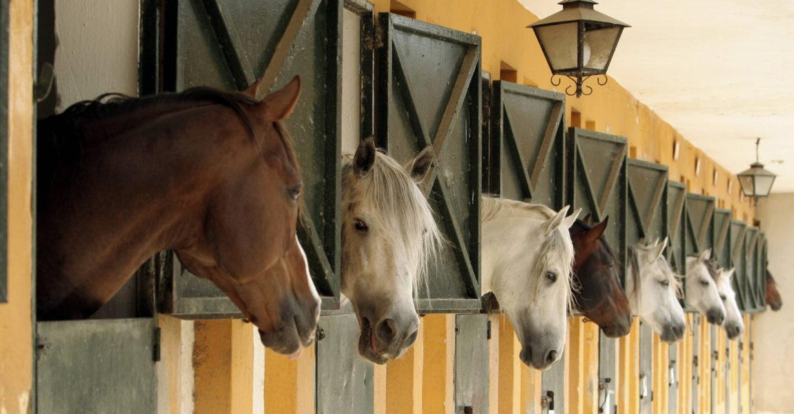 (Foto: IMAGO/Blickwinkel) (Foto: IMAGO/Blickwinkel) Stallanlage in Jerez de la Frontera, Spanien, Andalusien horse stable in Jerez de la Frontera, Spain, Andalusia BLWS164157  Stall plant in Jerez de La Frontera Spain Andalusia Horse stable in Jerez de La Frontera Spain andalusia BLWS164157