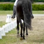 Richtig-galoppieren-150x150-fede5579ed8cc168000e4ece4b29393d90e3e592 Dressage horse and rider