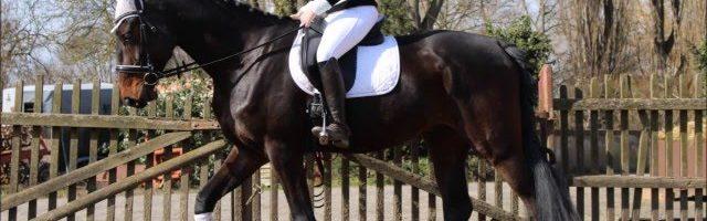Mein neues Pferd Cooper