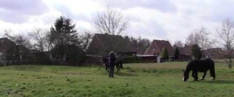 Mein Pferd Mai 2015: Ammenstute - YouTube thumbnail