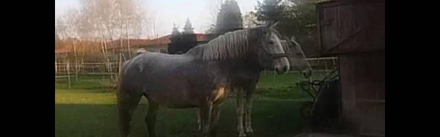 Meine beiden Pferde#Honeymoon #Jacky :) bitte infobox lesen☺?