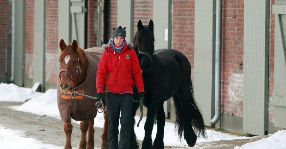 Super Die Thermoregulation bei Pferden - Mein Pferd – Mein Freund @GV_34