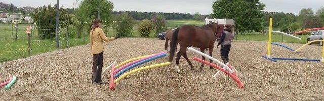 Wie Pferde lernen: Engpass mit Schwimmnudeln
