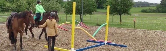 Wie Pferde lernen: Tor mit Schwimmnudeln