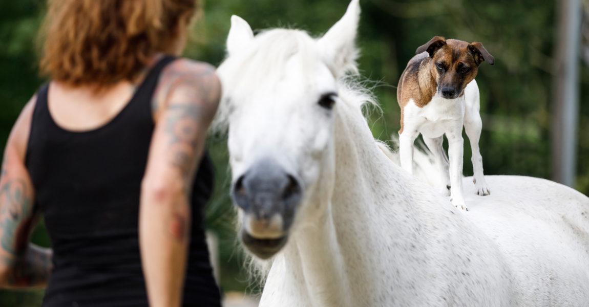 Mein Pferd Magazin - Hund und Pferd Mein Pferd Magazin - Hund und Pferd.  Foto: DANIEL ELKE