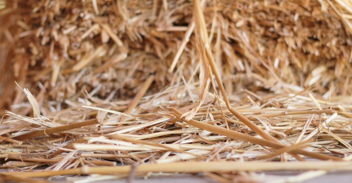 Detail Shot Of Hay