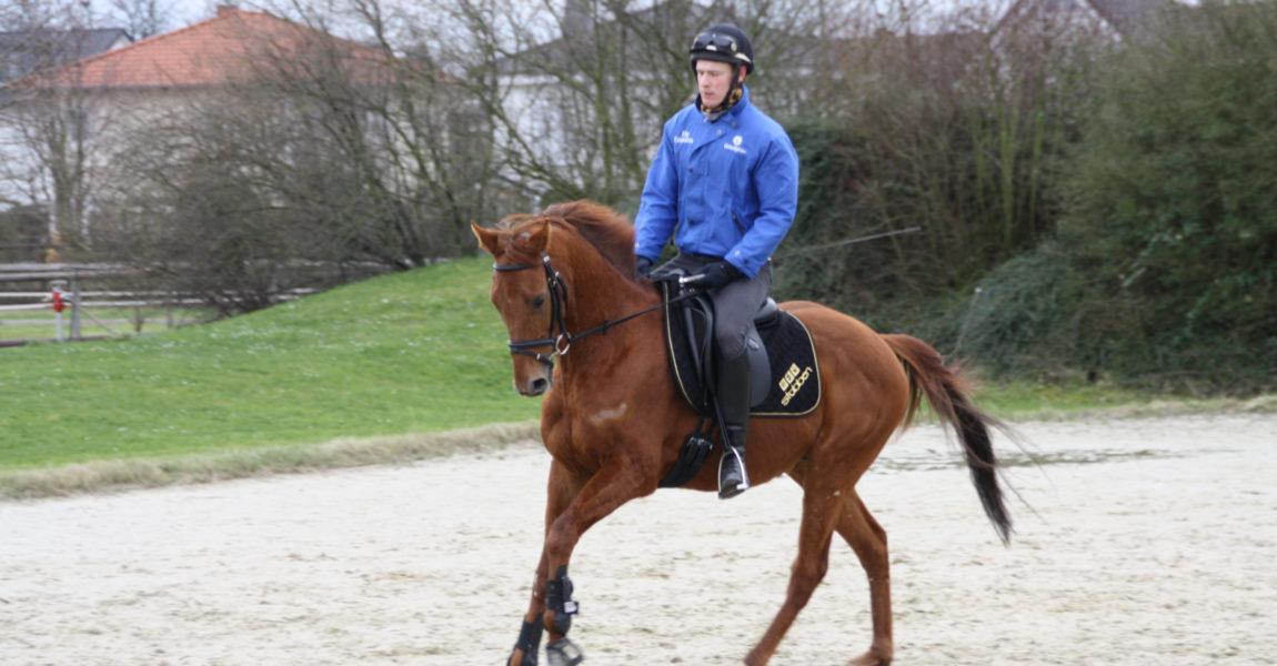 Angreifer mit seinem Reiter Tobias Brenner beim Training in der Reitanlage Sieben Morgen