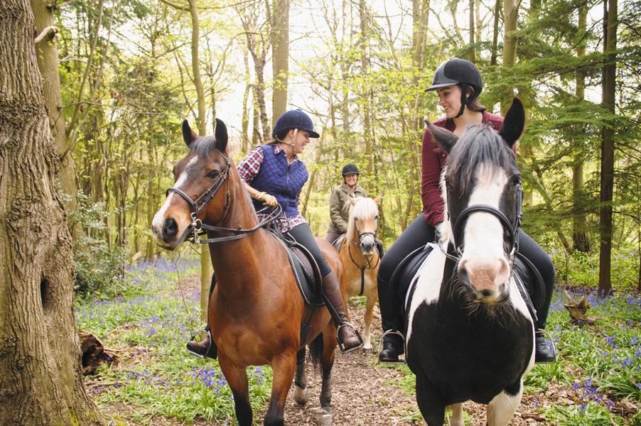 Horseback riders talking in forest Horseback riders talking in forest