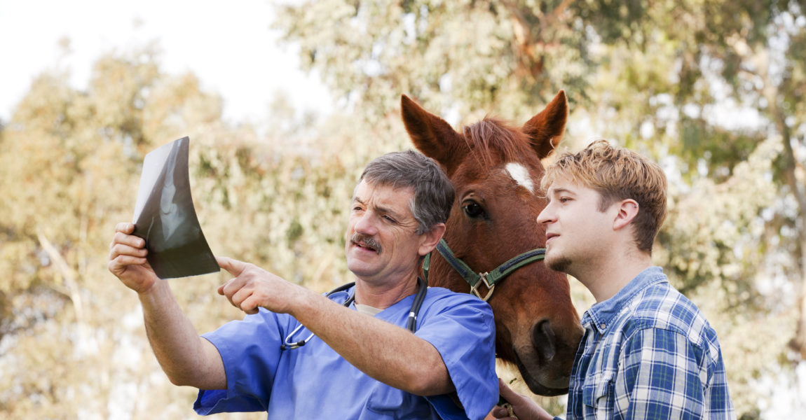 Vet discussing X-ray with horse owner