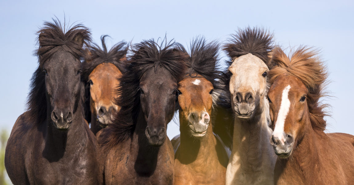 pferde fohlen bilder  ausmalbilder