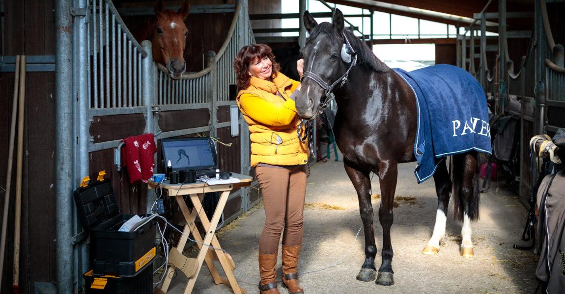 Mein Pferd Magazin Reportage für das Mein Pferd Magazin. Foto: DANIEL ELKE