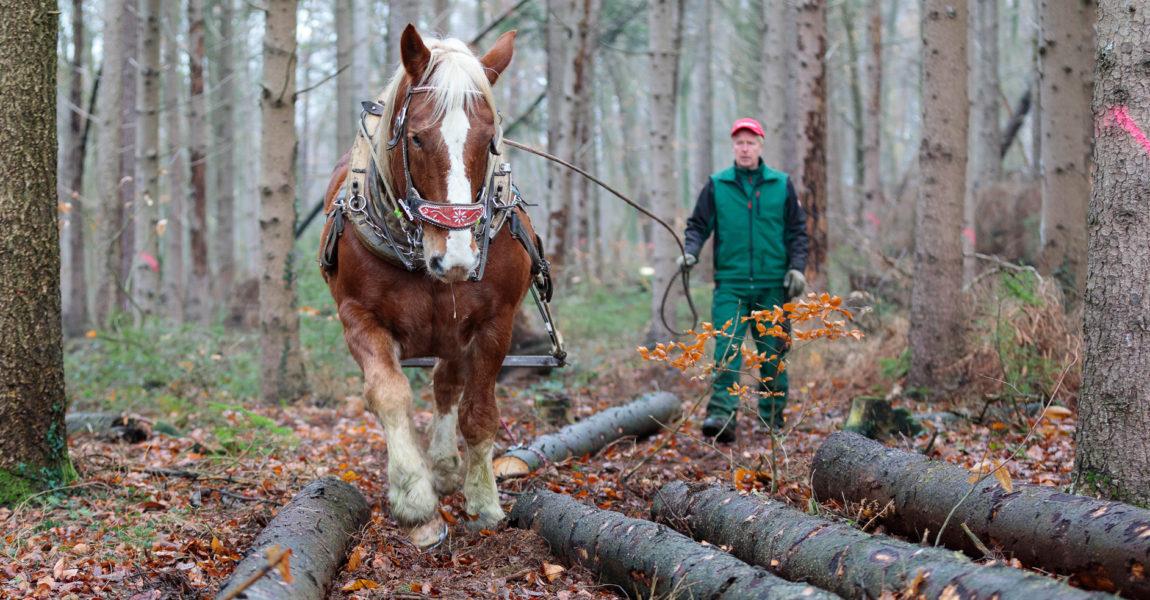 Holzrücken für das Mein Pferd Magazin Foto: DANIEL ELKE