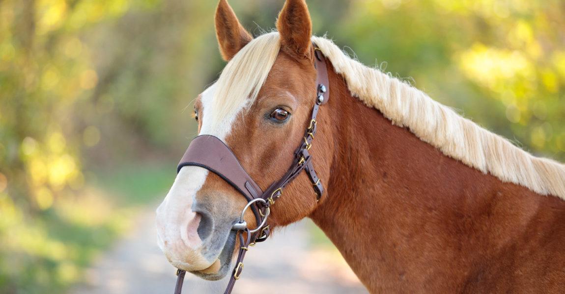 Mein Pferd Magazin - Gütesiegel Mein Pferd Magazin Gütesiegel. Foto: DANIEL ELKE