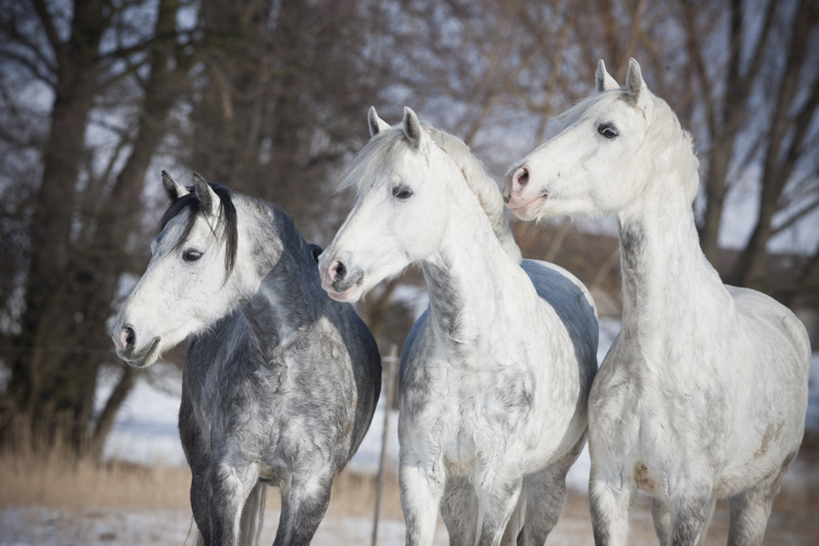 Was Sind Pferde