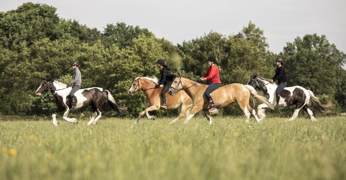 Sattelloses Reiten Sattelloses Reiten in Bad Lear für das Mein Pferd Magazin am 06.06.2017 . Foto: DANIEL ELKE
