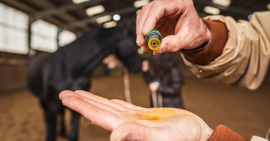Mein Pferd Shooting für das Mein Pferd Magazin am 08.05.2019 in Burgneustadt. Foto: DANIEL ELKE