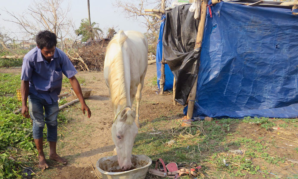 WTG-Odisha-Soforthilfe-Pferde-1_(c)APOWA