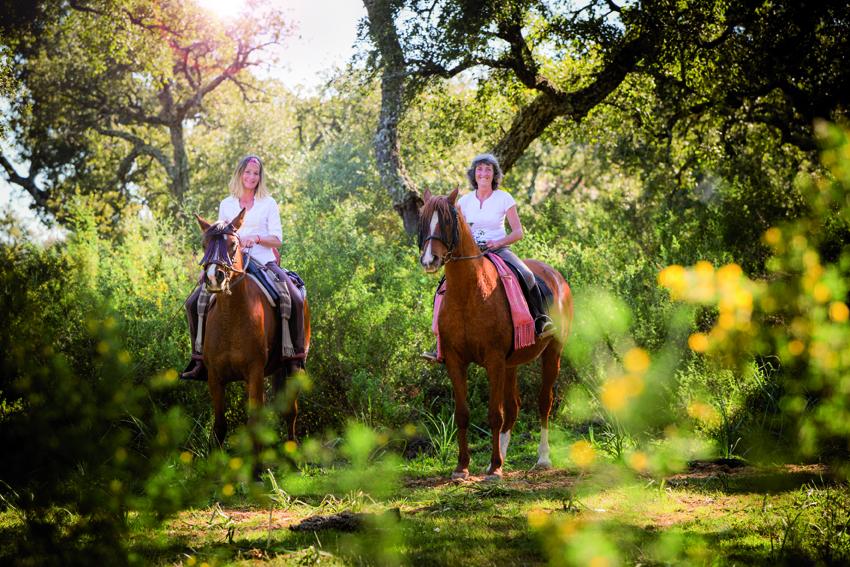pferde_3-081_cmyk