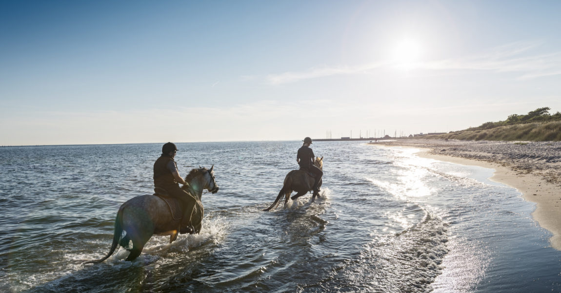 Two Horses Being Ridden on the Beach Into the Sunset. Two horses and their riders riding along in the shallow waters on the Baltic next to the beach at Klintholm Havn on the island of Møn in Denmark. Photographed in the late  evening summer light they are walking into the sunset. The horses' loved being in the water giving them chance to cool off after a long day. Both riders are wearing riding gear, both with protective helmets. Colour, horizontal format with lots of copy space.