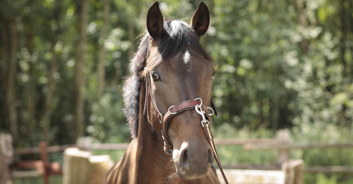 Mein Pferd Shooting für das Mein Pferd Magazin am 08.08.2019 in  Foto: DANIEL ELKE