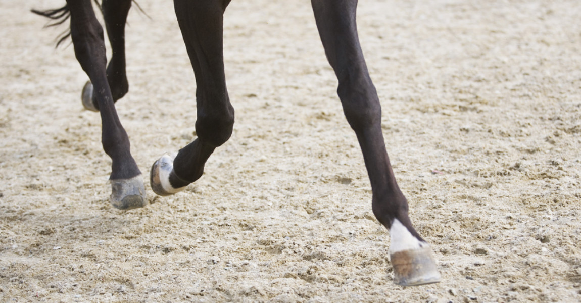 detail of horse doing dressage exercise