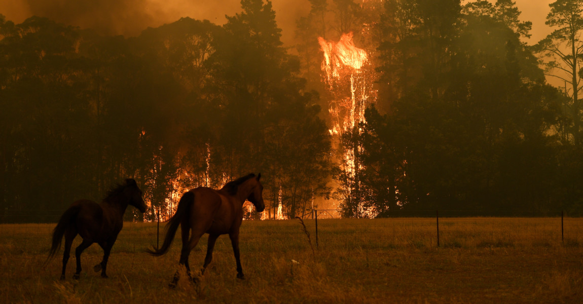 BUSHFIRES NSW, Horses are seen in a paddock as the Gospers Mountain Fire impacts a property at Bilpin, Saturday, Decemb BUSHFIRES NSW, Horses are seen in a paddock as the Gospers Mountain Fire impacts a property at Bilpin, Saturday, December 21, 2019. Conditions are expected to worsen across much of NSW as temperatures tip 40C.  ACHTUNG: NUR REDAKTIONELLE NUTZUNG, KEINE ARCHIVIERUNG UND KEINE BUCHNUTZUNG GOSPERS MOUNTAIN NSW AUSTRALIA PUBLICATIONxINxGERxSUIxAUTxONLY Copyright: xDANxHIMBRECHTSx 20191221001438923177