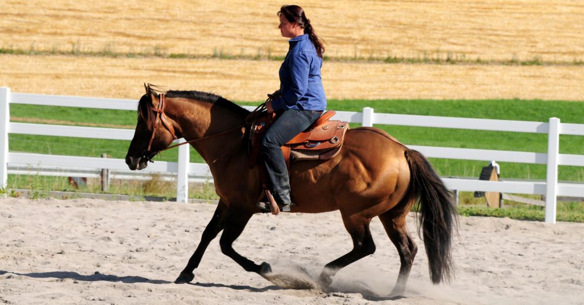 Westernpferd (c) A. Schmelzer