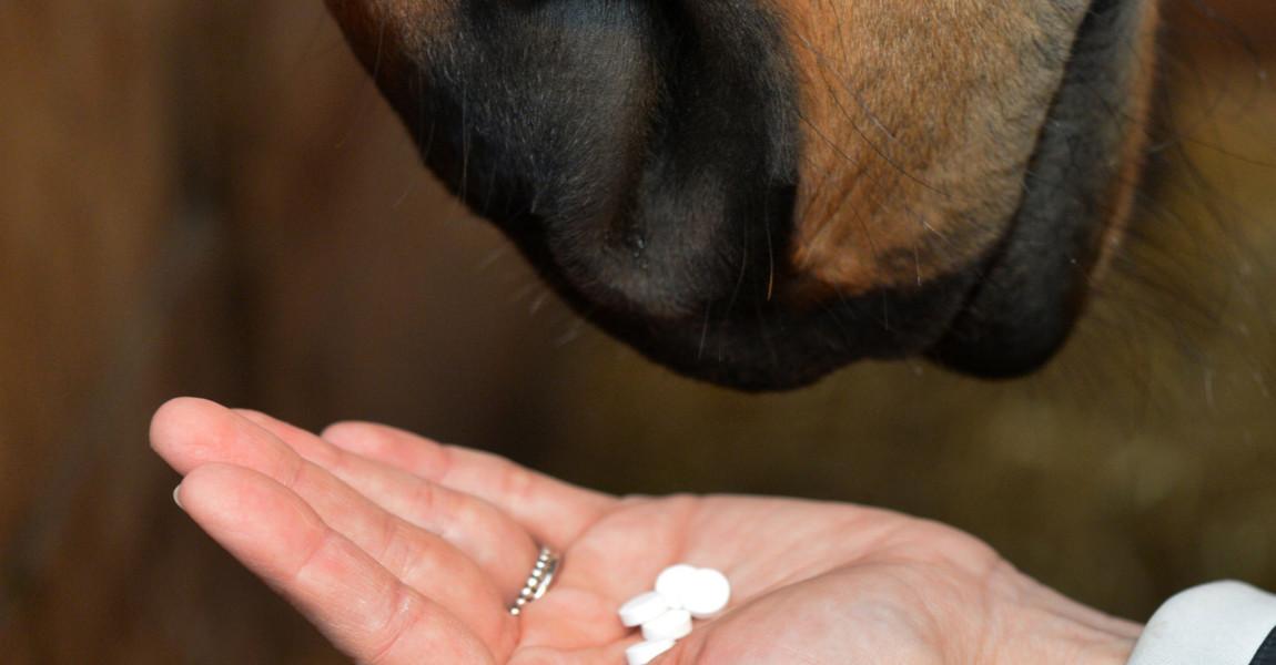 Pferd Ein Pferd bekommt Medizin verabreicht, aufgenommen am 24.11.2017 in Hamburg. Foto: Frank May/picture alliance | Verwendung weltweit