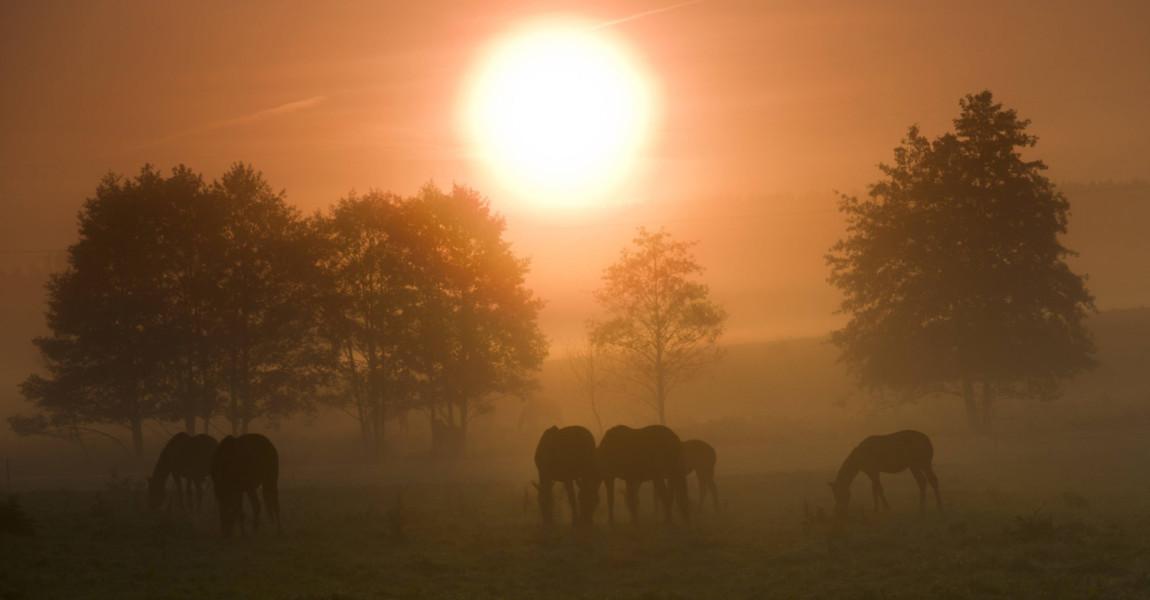 imago0056115955h Bildnummer: 56115955 Datum: 19.03.2011 Copyright: imago/blickwinkel sonnenaufgang im nebel mit grasenden pferden, deutschland, sachsen, vogtland, vogtl‰ndische schweiz sunrise over a pasture with horses, germany, saxony, vogtland, vogtl‰ndische schweiz blws268888 kbdig 2011 quer querformat vogtl‰ndische schweiz europa europ‰isch mitteleuropa mitteleurop‰isch deutschland deutsch ostdeutschland ostdeutsch sachsen s‰chsisch vogtland deutsche deutscher deutsches morgenstimmung nebel morgennebel fr¸hnebel am morgen auflˆsen auflˆsend auflˆsender auflˆsende sich auflˆsen sich auflˆsend sich auflˆsende sich auflˆsender sich auflˆsende nebel sich auflˆsender nebel sich auflˆsende morgennebel sich auflˆsender morgennebel sich auflˆsende fr¸hnebel sich auflˆsender fr¸hnebel lˆsen sich auf lˆst sich auf kulturlandschaft kulturlandschaften landschaft landschaften jahreszeit jahreszeiten herbst herbstlich feld felder gehˆlz gehˆlze pflanze pflanzen gehˆlzpflanze gehˆlzpflanzen d‰mmerung morgend‰mmerung morgengra¸n morgen morgens morgendunst morgenlicht im morgenlicht tagesanbruch bei tagensanbruch malerisch malerische malerisches malerischer pittoresk pittoreske pittoreskes pittoresker idyllisch idyllische idyllisches idyllischer stimmungsvoll stimmungsvolle stimmungsvoller stimmungsvolles idylle idyllen romantisch romantische romantischer romantisches romantik naturidylle naturidyllen landschaftliche schˆnheit naturschˆnheit landschaftlich schˆn morgenrot morgenrˆte baum b‰ume weide weiden viehweide viehweiden pferdeweide pferdeweiden tier tiere s‰ugetier s‰ugetiere huftier huftiere unpaarhufer pferd pferde schemenhaft schemenhafte schemenhafter schemenhaftes unwirklich unwirkliche unwirklicher unwirkliches herde herden pferdeherde pferdeherden gruppe gruppen fressen fressend fressende fressender fressendes grasen grasend grasende grasender grasendes weidend weidende weidender weidendes morgensonne in der morgensonne bei tages