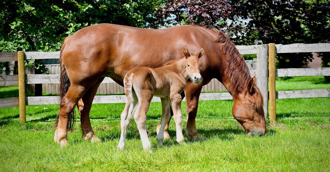 Mare-and-Foal-for-web