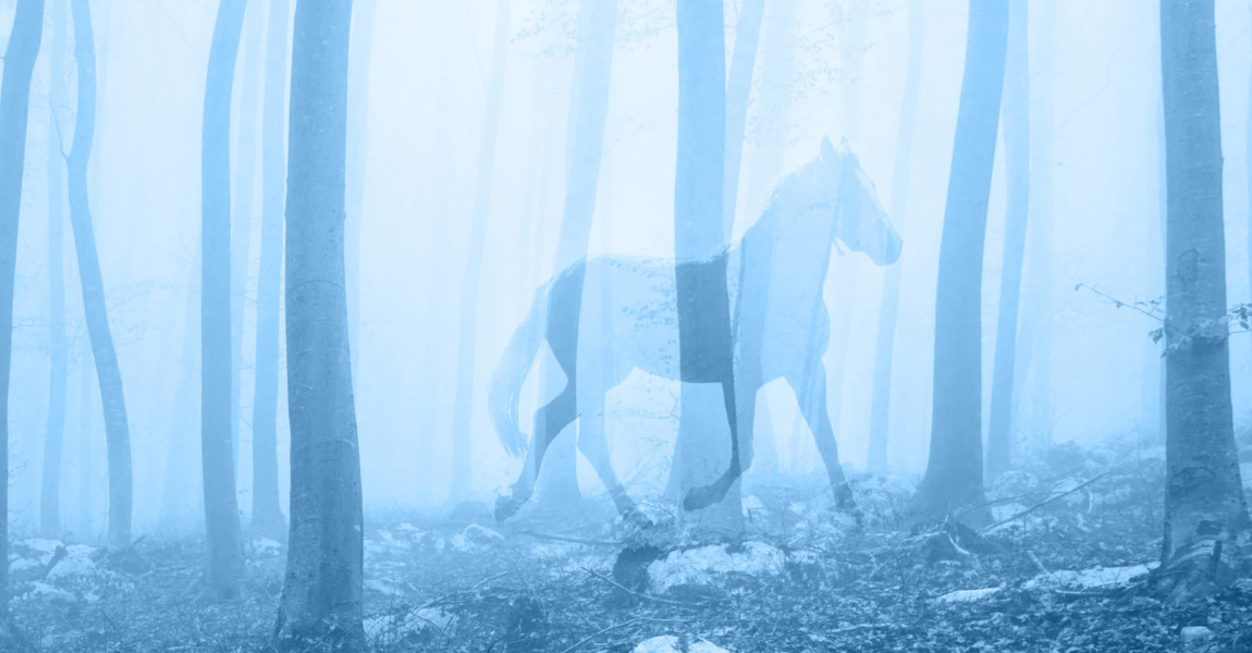 Horse in the fantasy blue colored foggy fairytale forest landscape. Double exposure technique used. Horse in the fantasy blue colored foggy fairytale forest landscape. Double exposure technique used.