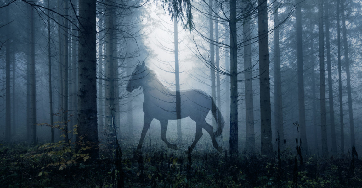 Horse in the fantasy dark fairy tale forest landscape. Double exposure technique used. Horse in the fantasy dark fairy tale forest landscape. Double exposure technique used.