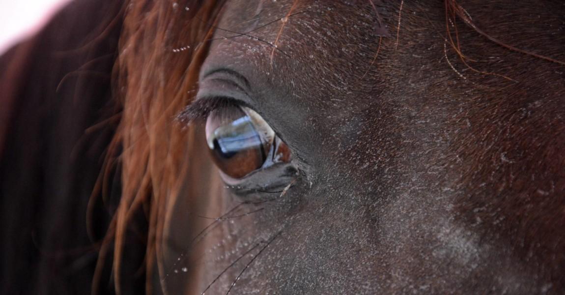 Im Horseairium in Gilten werden lungenkranke Pferde mit einer Soletherapie behandelt Die Bedampfung Im Horseairium in Gilten werden lungenkranke Pferde mit einer Soletherapie behandelt. Die Bedampfung mit Sole findet in der Führanlage statt. Gilten, 28.07.2016 Foto:xS.xDöpkex/xFuturexImage in Horseairium in Gilten will consumptive Horses with a Soletherapie treated the with Sole finds in the Führanlage instead Gilten 28 07 2016 Photo XS xDöpkex xFuturexImage