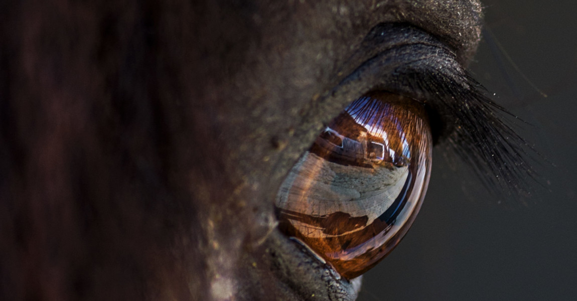 Close-Up Of Reflection In Horse Eye