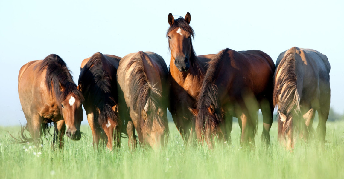 Group of wild horses in field at morning.