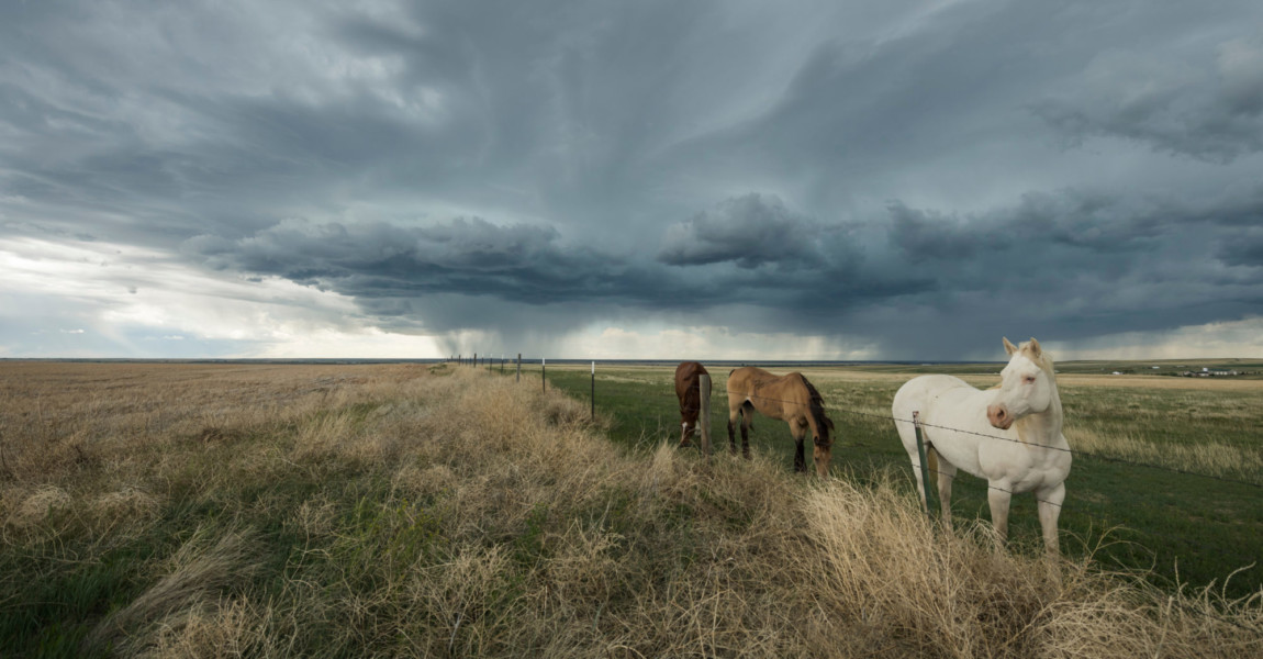 Horses,On,The,Great,Plains,Withstanding,The,Storm Horses on the Great Plains Withstanding the Storm