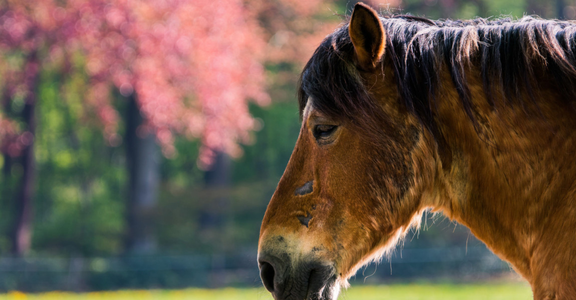 Old,Horse,With,Scars,In,A,Colourfull,Field old horse with scars in a colourfull field