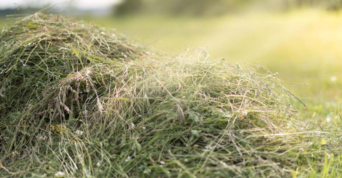 Mowed hay on the field. Mowed hay on the field