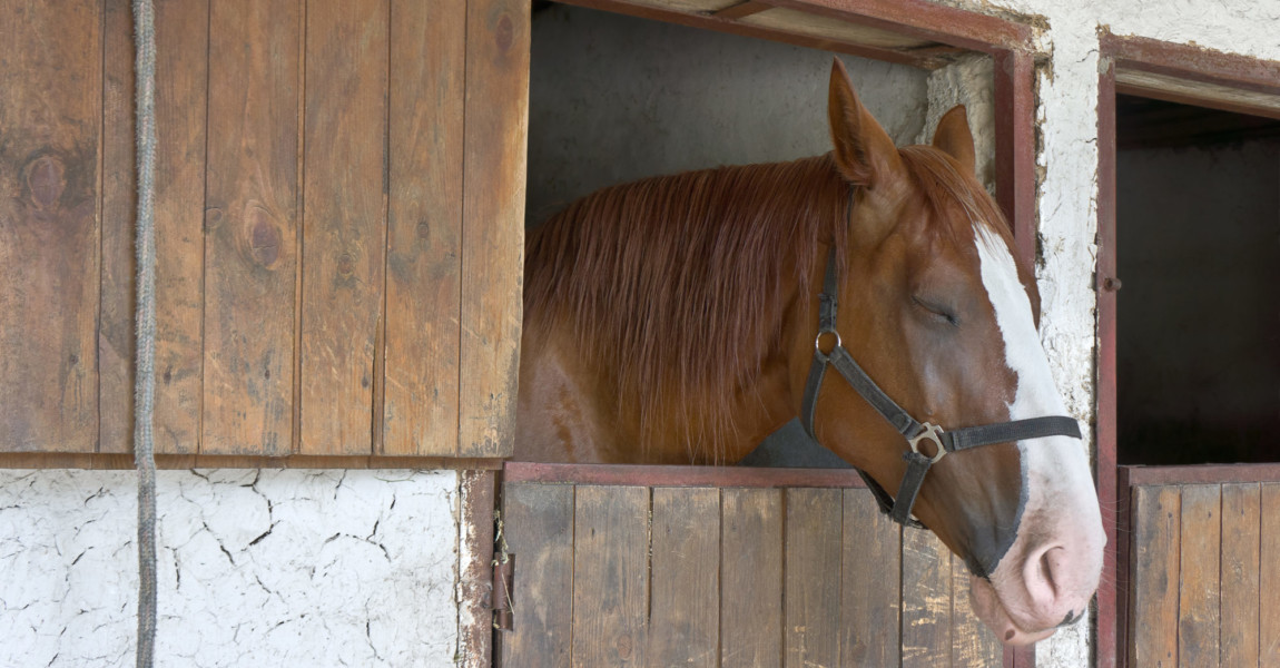Sleeping,Horse,Stands,In,The,Stable Sleeping horse stands in the stable