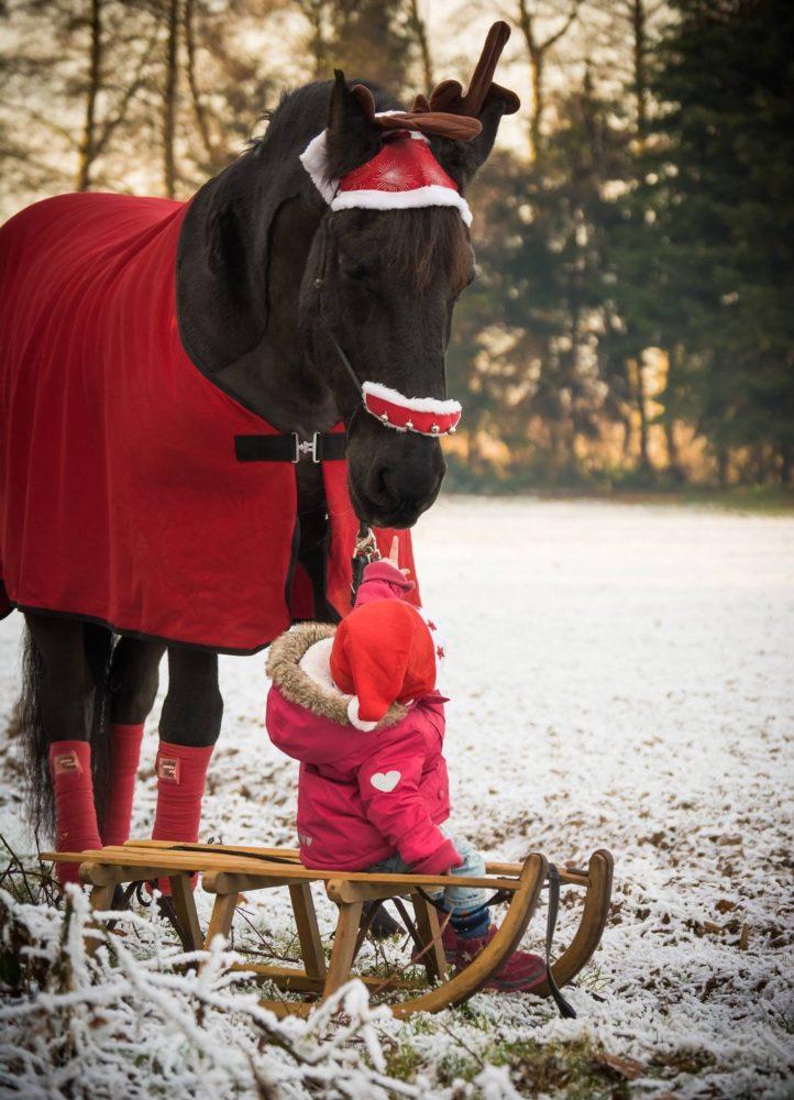 weihnachten mein pferd mein freund. Black Bedroom Furniture Sets. Home Design Ideas
