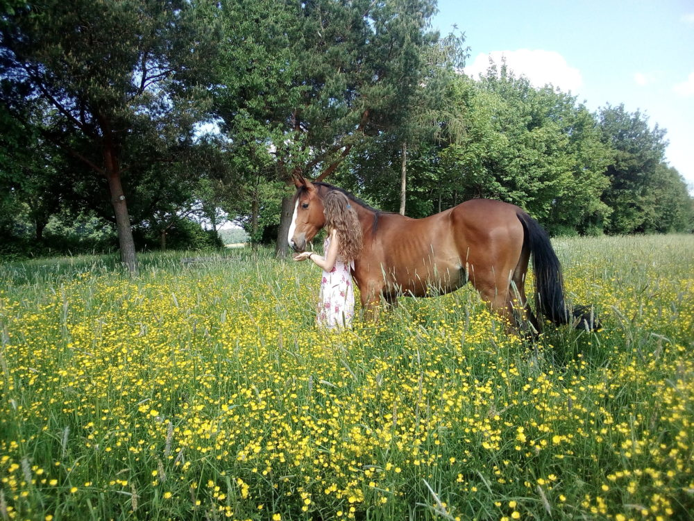 Frühling in der Butterblumenwiese