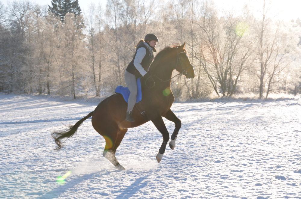 Schneehase Winteredition