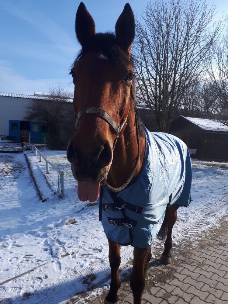 #happyhorse