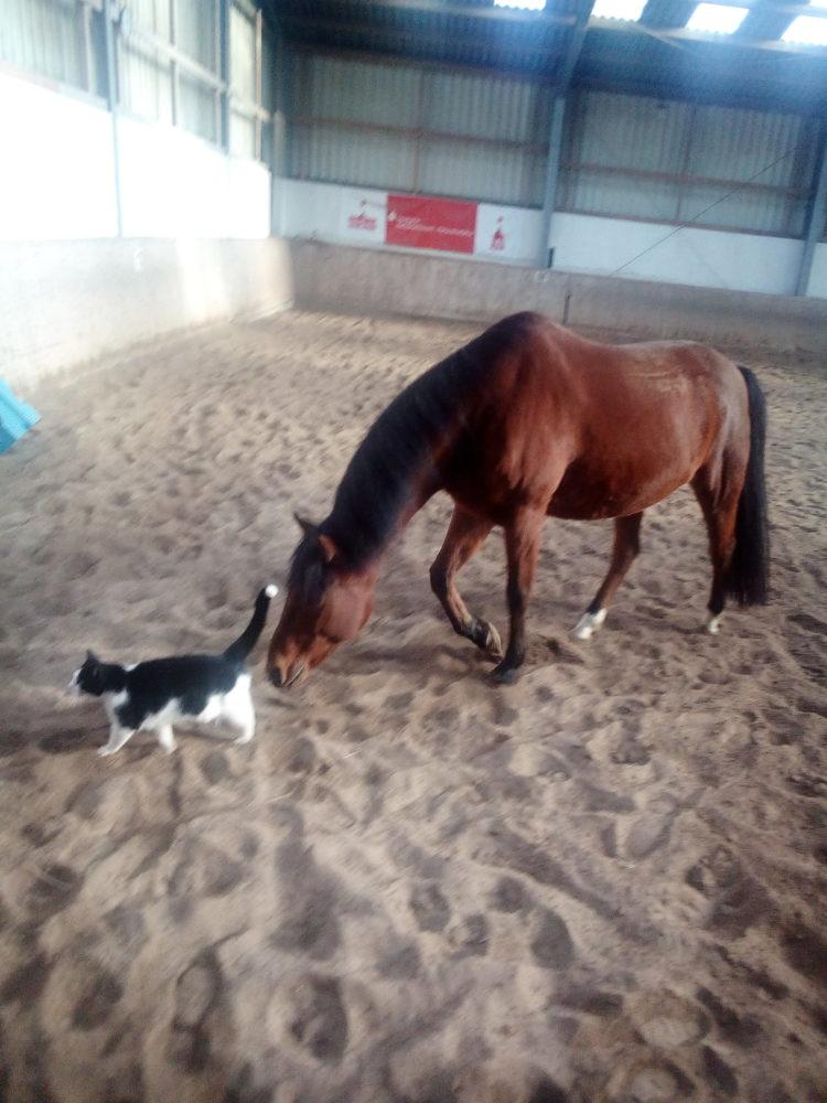 Pony Mogli und Kater Murphy spielen in der Halle