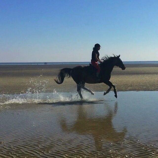 Bella und Sina jagen am Strand