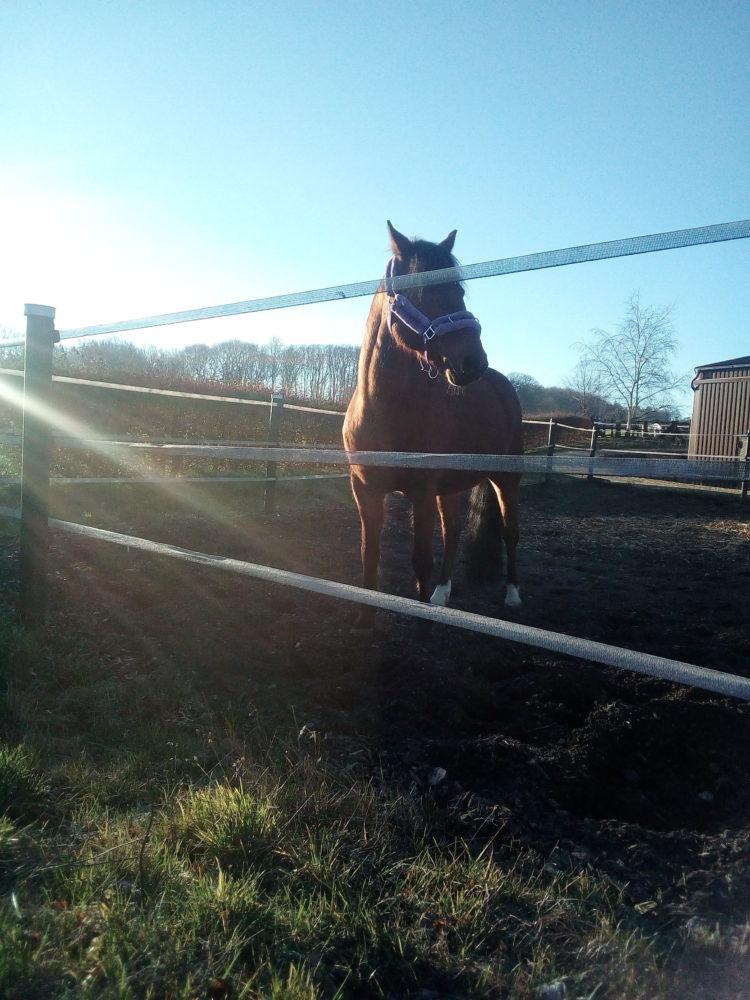 Pony Mogli genießt die Sonne.